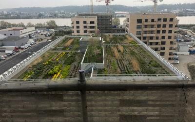 COBAREC et TECHNIVERT réalisent une terrasse jardin à BORDEAUX.